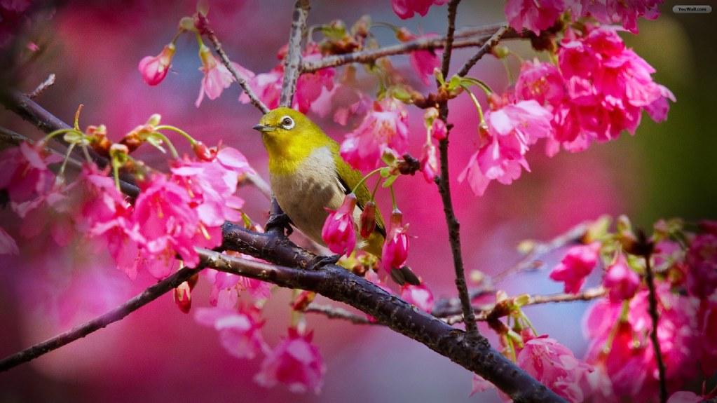 birds in the springtime
