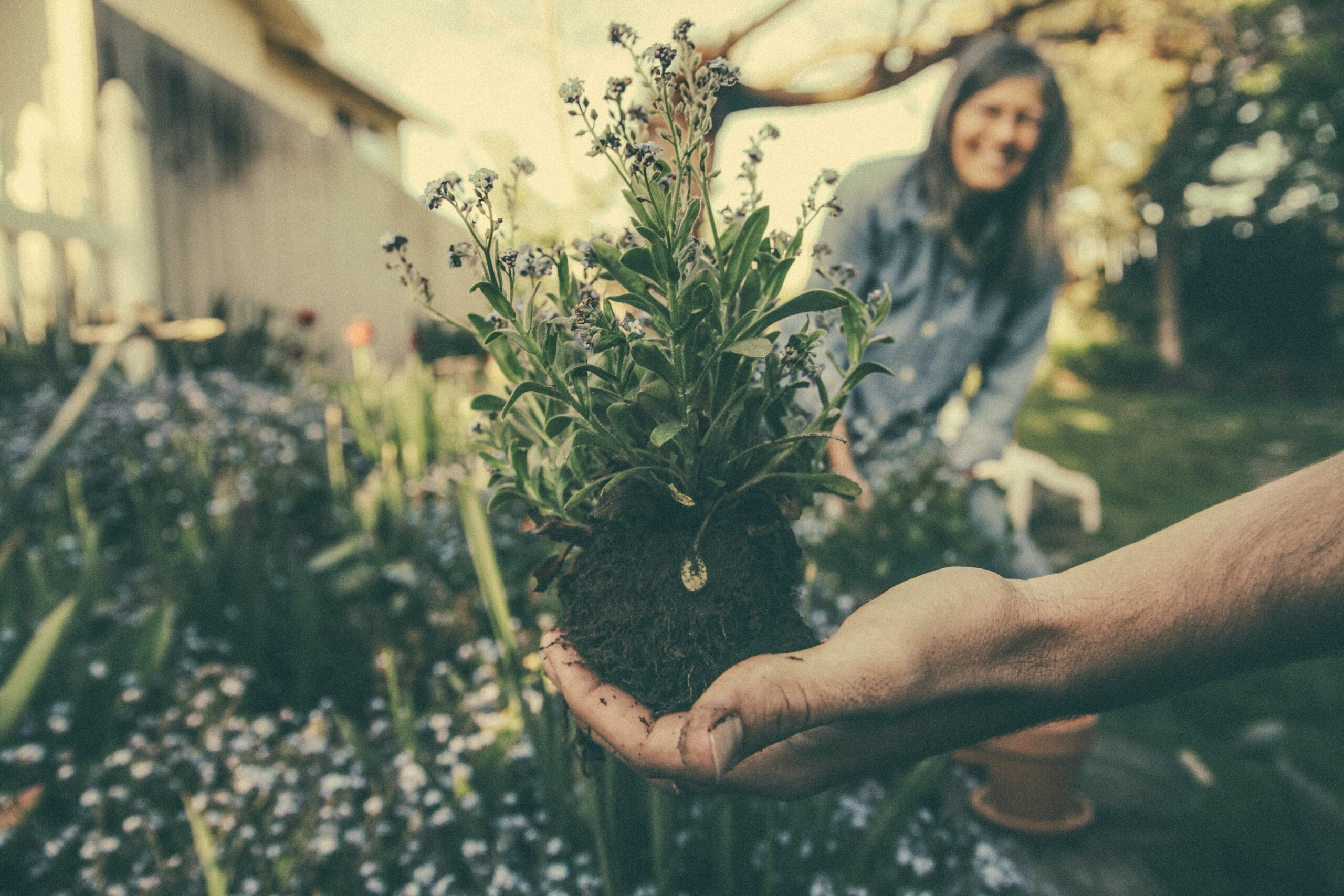 a teacher's hobby; gardening